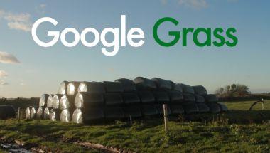 Google Grass